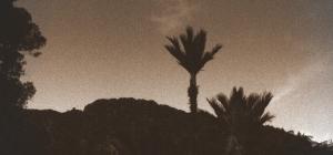 nikau2 22-06-2012 5-20-37 PM